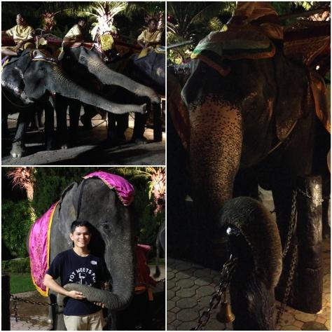 FantaSea Elephant