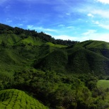 Beautiful Cameron Highlands