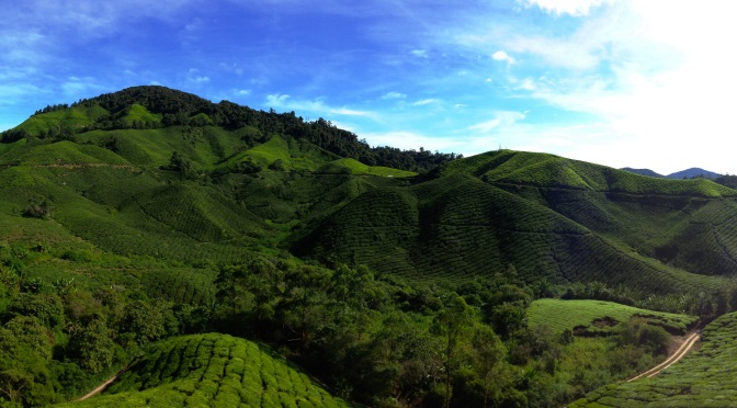 Day 3: What's at Cameron Highlands?