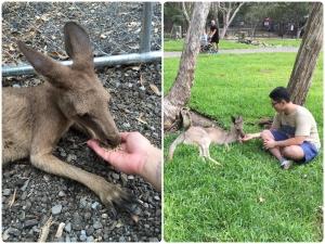 Kangaroo Feed