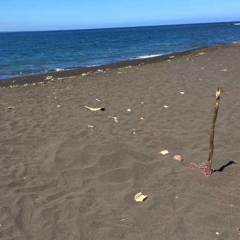 There were sticks sticking out all over the beach. In the sands, turtle eggs.